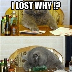 Poker Cat - i lost why !?