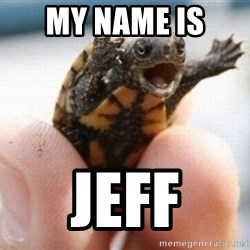 angry turtle - My name is  Jeff