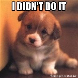 cute puppy - I didn't do it