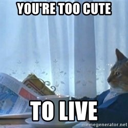 newspaper cat realization - you're too cute to live