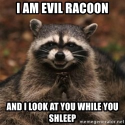 evil raccoon - i am evil racoon and i look at you while you shleep