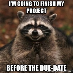 evil raccoon - I'm going to finish my project before the due-date