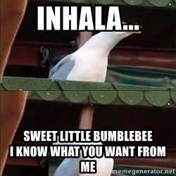 Gaviota *inhales* - INHALA... sweet little bumblebee                                 i know what you want from me