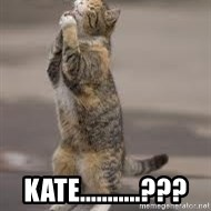 Begging Cat - Kate...........???