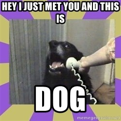 Yes, this is dog! - hey i just met you and this is DOG