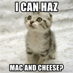 Can haz cat - I can haz Mac and Cheese?