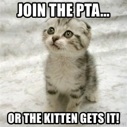 Can haz cat - Join the pta... or the kitten gets it!