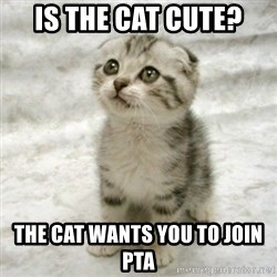 Can haz cat - is the cat cute? the cat wants you to join pta