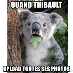 surprised koala - Quand thibault upload toutes ses photos