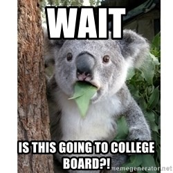 surprised koala - Wait Is this going to College board?!