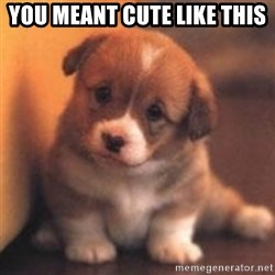 cute puppy - you meant cute like this