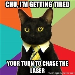 Business Cat - CHU, i'm getting tired your turn to chase the laser