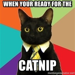 Business Cat - when your ready for the  catnip