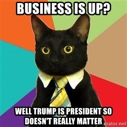 Business Cat - BUSINESS is up? well trump is president so doesn't really matter