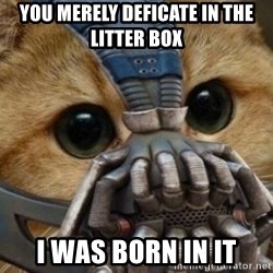 bane cat - you merely deficate in the litter box i was born in it