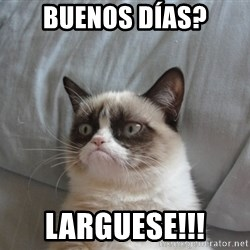 Grumpy cat good - BUENOS DÍAS? LARGUESE!!!