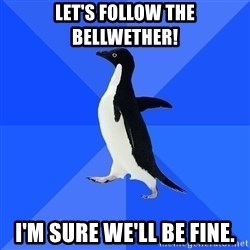 Socially Awkward Penguin - let's follow the bellwether! i'm sure we'll be fine.