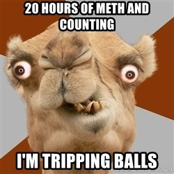 Crazy Camel lol - 20 hours of meth and counting I'm tripping balls