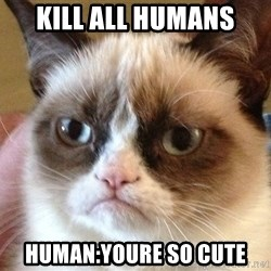 Angry Cat Meme - kill all humans human:youre so cute