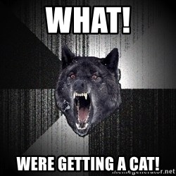 Insanity Wolf - What! Were getting a cat!