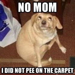 Oh You Dog - no mom i did not pee on the carpet