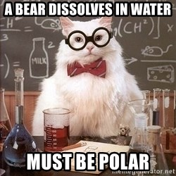 Chemistry Cat - A bear dissolves in water must be polar