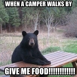 Patient Bear - when a camper walks by   give me food!!!!!!!!!!!!