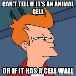 Futurama Fry - Can't tell if it's an animal cell or if it has a cell wall