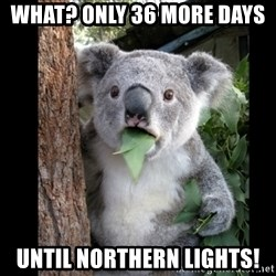 Koala can't believe it - what? only 36 more days  until Northern Lights!