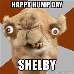 Crazy Camel lol - Happy hump day Shelby