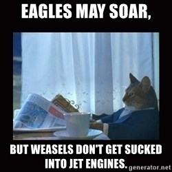 i should buy a boat cat - Eagles may soar, but weasels don't get sucked into jet engines.