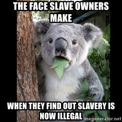 Koala can't believe it - the face slave owners make when they find out slavery is now illegal