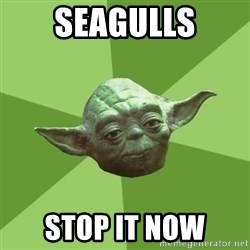 Advice Yoda Gives - seagulls stop it now