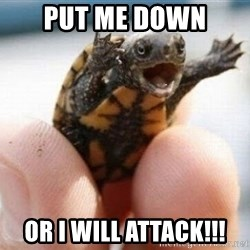 angry turtle - Put me down Or i will attack!!!