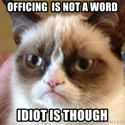 Angry Cat Meme - OFFICING  IS NOT A WORD IDIOT IS THOUGH