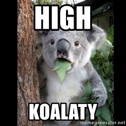 Koala can't believe it - High Koalaty