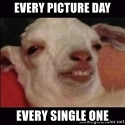 10 goat - every picture day every single one