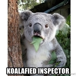 surprised koala - koalafied inspector