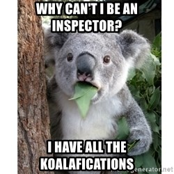 surprised koala - Why can't i be an inspector? i have all the koalafications