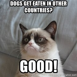 Grumpy cat good - Dogs get eaten in other countries? Good!