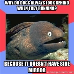 Bad Joke Eels - Why do dogs always look behind when they running? because it doesn't have side mirror