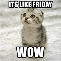 Can haz cat - Its like Friday Wow