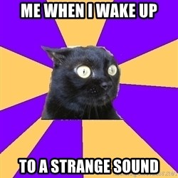 Anxiety Cat - Me when I wake up To a strange sound