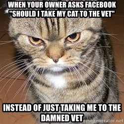"angry cat 2 - When your owner asks Facebook ""Should I take my cat to the Vet"" Instead of just taking me to the damned vet"
