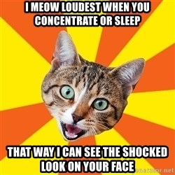 Bad Advice Cat - I meow loudest when you concentrate or sleep that way I can see the shocked look on your face