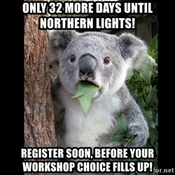 Koala can't believe it - ONLy 32 more days until Northern Lights!  Register soon, before your workshop choice fills up!