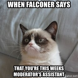 Grumpy cat good - when falconer says  that you're this weeks moderator's assistant