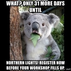 Koala can't believe it - What? Only 31 more Days until  Northern Lights! REgister now before your workshop fills up.