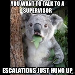 Koala can't believe it - you want to talk to a supervisor escalations just hung up