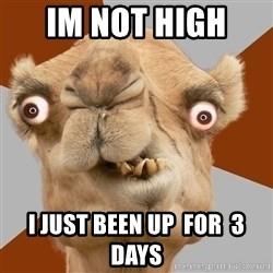 Crazy Camel lol - im not high  i just been up  for  3 days